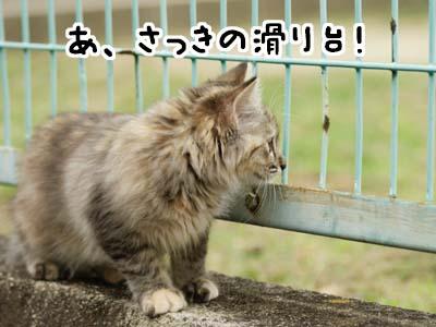 cat1161