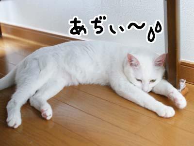 cat1163