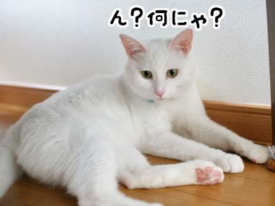 cat1164