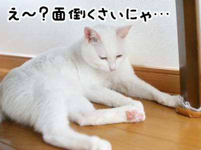 cat1165