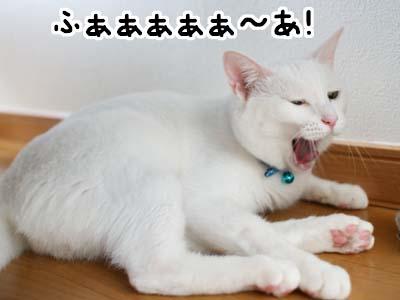 cat1166