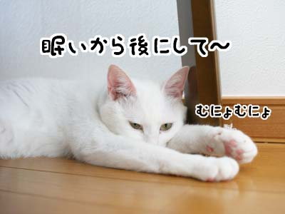 cat1168