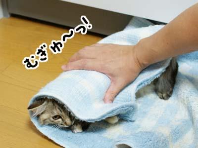 cat1170