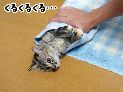 cat1171
