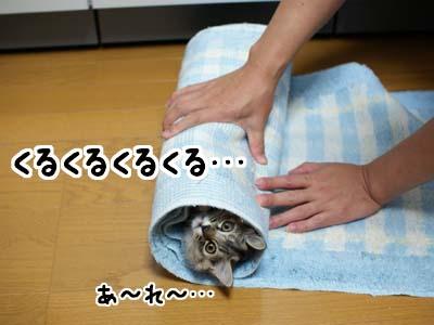 cat1172
