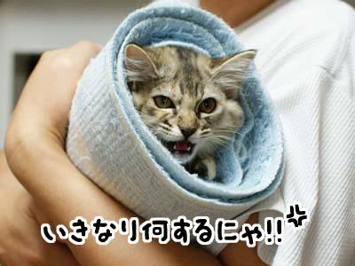 cat1174