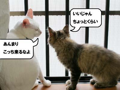 cat1175