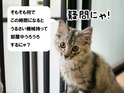 cat1176