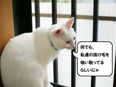 cat1177