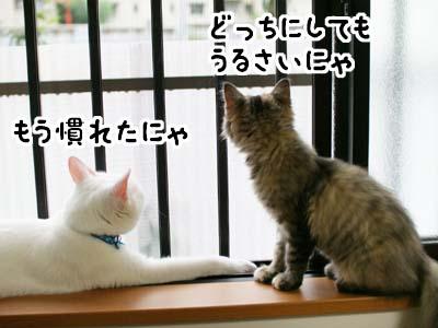 cat1178