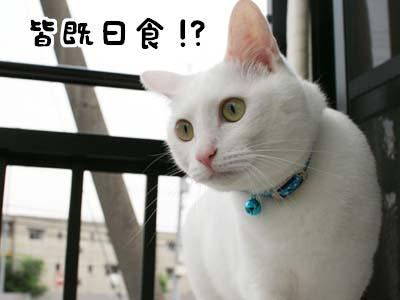 cat1180