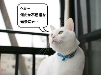 cat1184