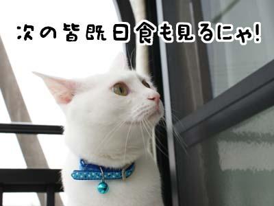 cat1185