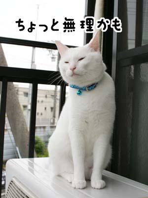 cat1186