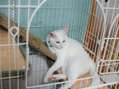 cat1187