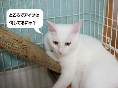 cat1188
