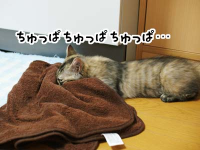 cat1189