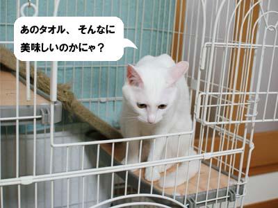 cat1190