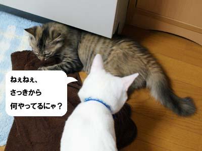 cat1191