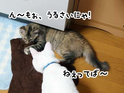 cat1192
