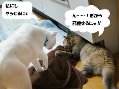 cat1193
