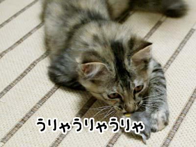 cat1194