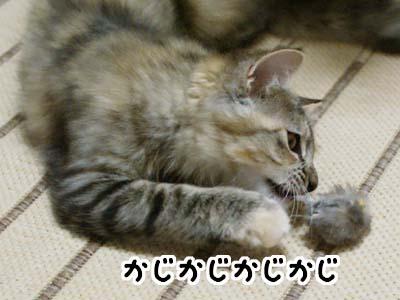 cat1195