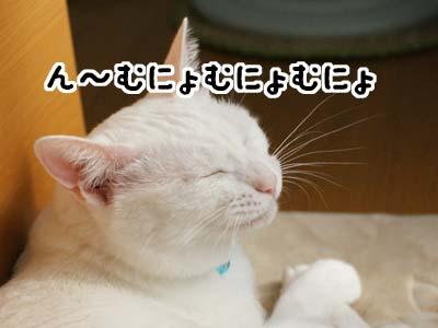 cat1197