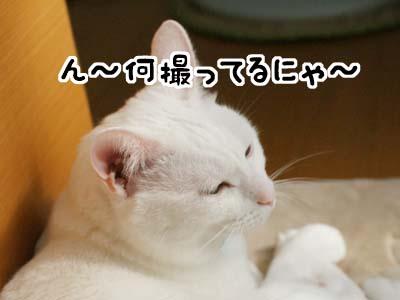 cat1200