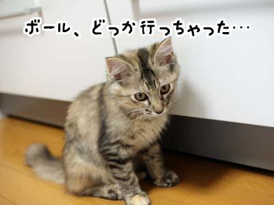 cat1201