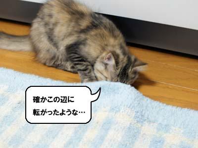 cat1202