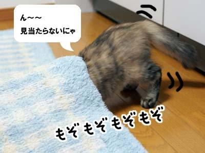 cat1203