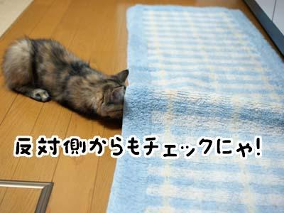 cat1204