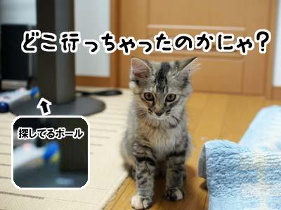 cat1206