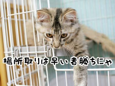 cat1208