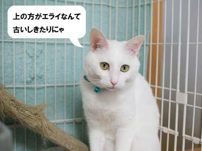 cat1209