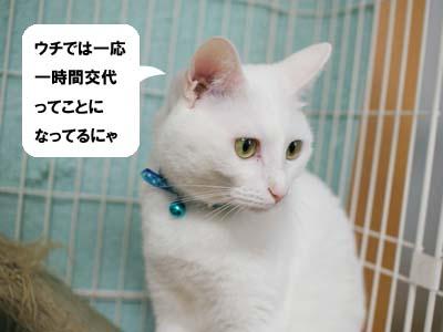 cat1210