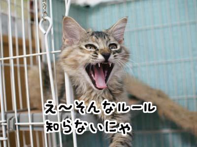 cat1211