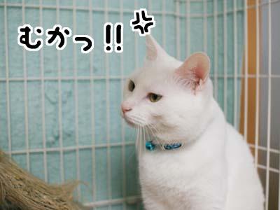 cat1212
