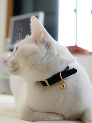 cat1213