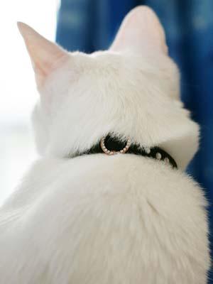 cat1214