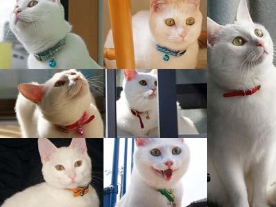 cat1216