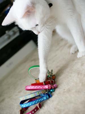 cat1217