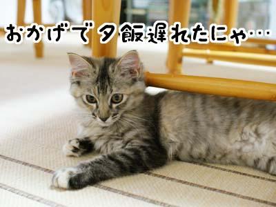 cat1223