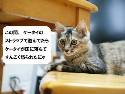 cat1224