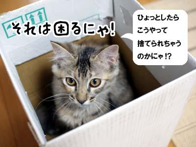 cat1226