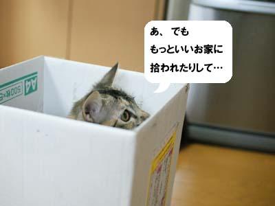 cat1227