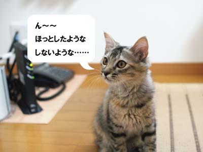 cat1229