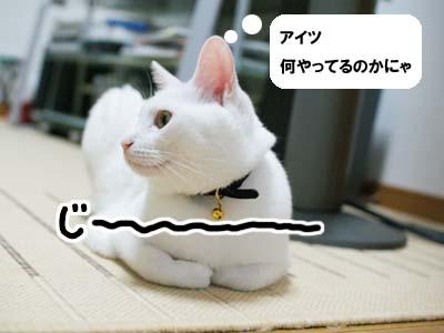 cat1230