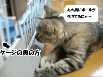 cat1231